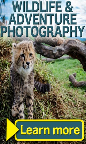 Wildlife and Travel Photography