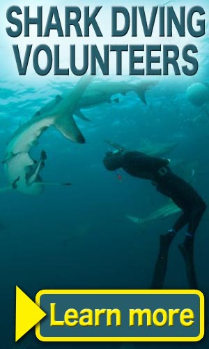 Shark Diving Program