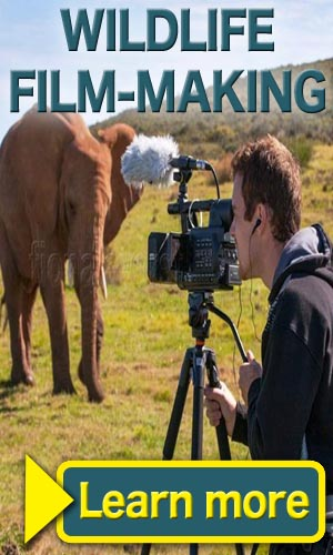 Wildlife Film-Making Program