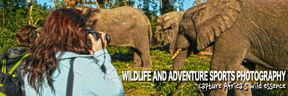Wildlife and adventure sports photography